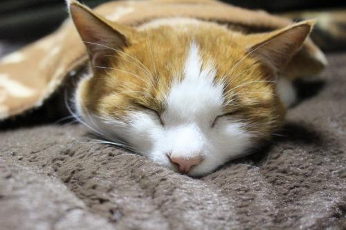 ブログNo.482(変わりゆく猫の寝相)5