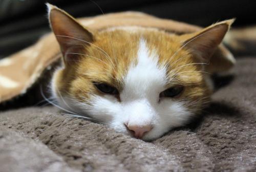 ブログNo.482(変わりゆく猫の寝相)6
