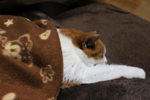 ブログNo.482(変わりゆく猫の寝相)7