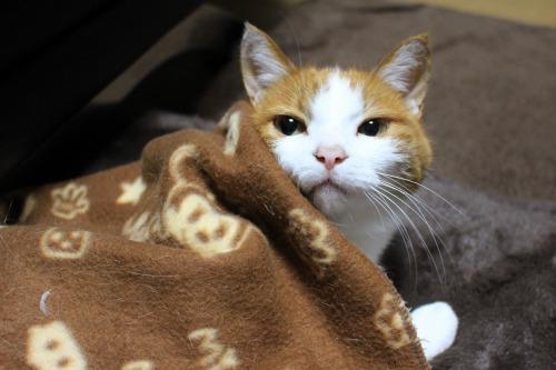 ブログNo.482(変わりゆく猫の寝相)9