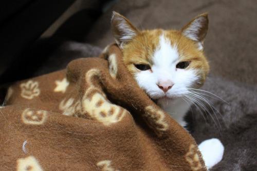 ブログNo.482(変わりゆく猫の寝相)10