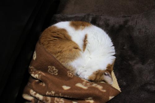 ブログNo.482(変わりゆく猫の寝相)12