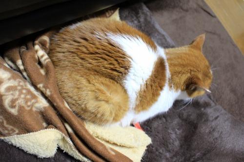 ブログNo.482(変わりゆく猫の寝相)13