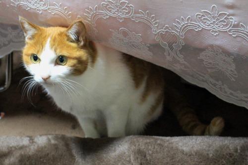 ブログNo.487(筋肉猫)4
