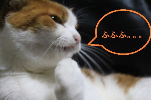 ブログNo.487(筋肉猫)9