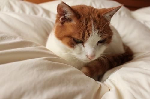 ブログNo.488(戸惑う猫)4