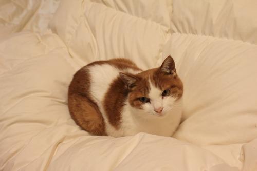 ブログNo.488(戸惑う猫)11