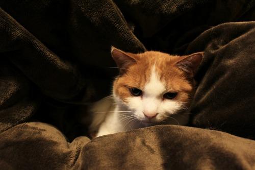 ブログNo.492(埋もれ猫)7
