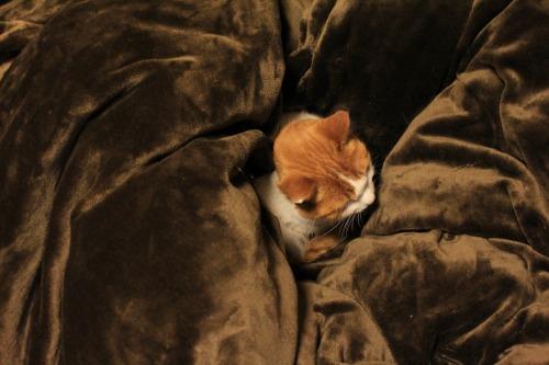 ブログNo.492(埋もれ猫)8