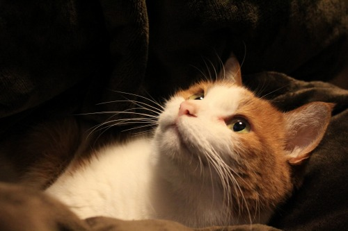 ブログNo.492(埋もれ猫)9