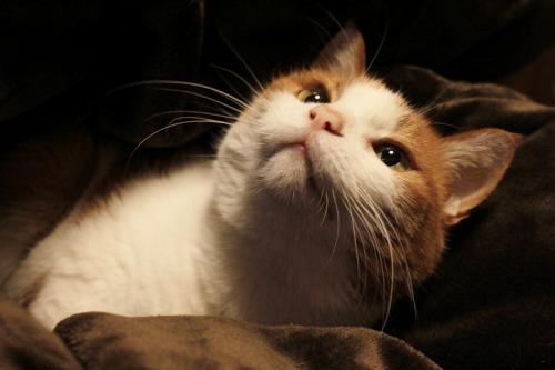 ブログNo.492(埋もれ猫)10