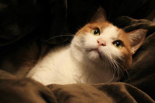 ブログNo.492(埋もれ猫)13