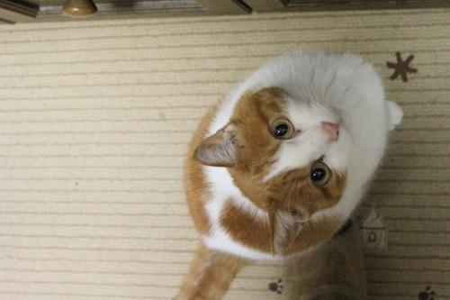 ブログNo.493(にゃ!鶏肉が!!)3