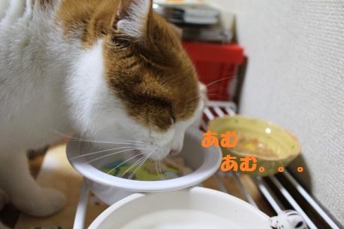 ブログNo.493(にゃ!鶏肉が!!)12