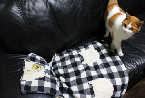 ブログNo.461(看病猫、じゃれ猫、爆睡猫)3