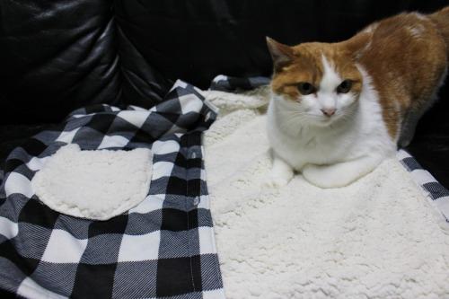 ブログNo.461(看病猫、じゃれ猫、爆睡猫)4