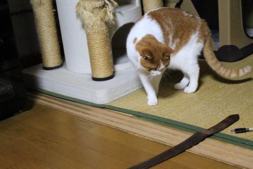 ブログNo.461(看病猫、じゃれ猫、爆睡猫)7