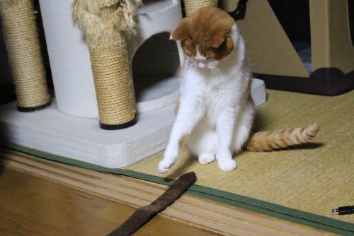 ブログNo.461(看病猫、じゃれ猫、爆睡猫)8