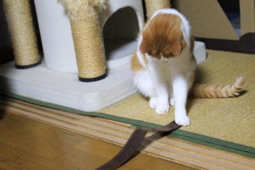 ブログNo.461(看病猫、じゃれ猫、爆睡猫)10