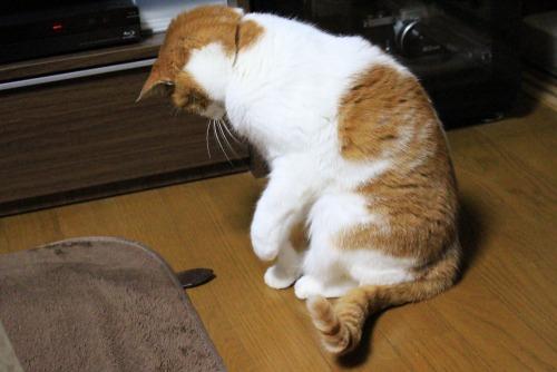 ブログNo.461(看病猫、じゃれ猫、爆睡猫)12