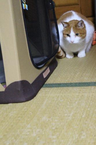 ブログNo.496(駆け抜ける猫)3