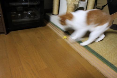 ブログNo.496(駆け抜ける猫)4
