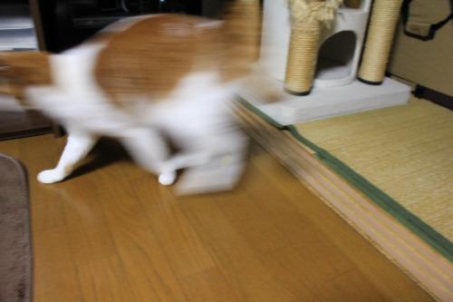 ブログNo.496(駆け抜ける猫)5