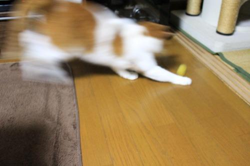 ブログNo.496(駆け抜ける猫)7