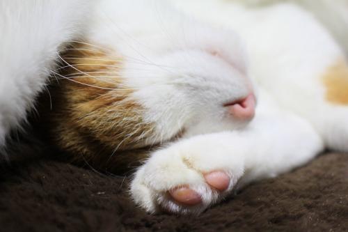 ブログNo.461(看病猫、じゃれ猫、爆睡猫)17