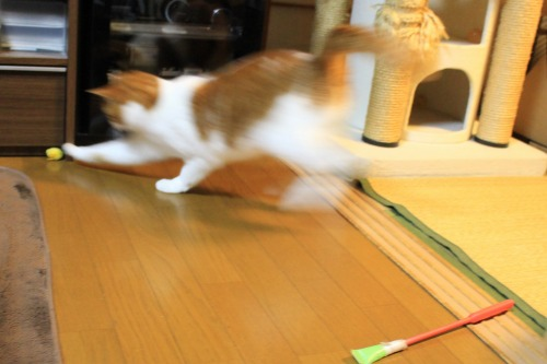 ブログNo.496(駆け抜ける猫)9