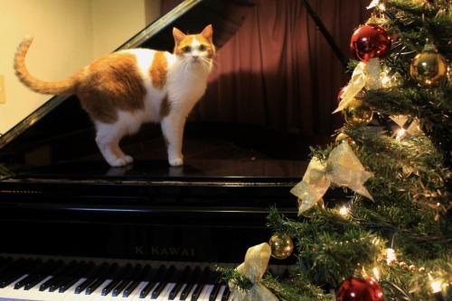 ブログNo.460(クリスマスツリーと猫)1