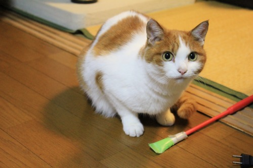 ブログNo.496(駆け抜ける猫)13