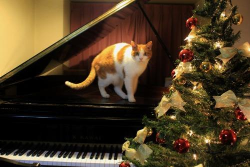 ブログNo.460(クリスマスツリーと猫)2