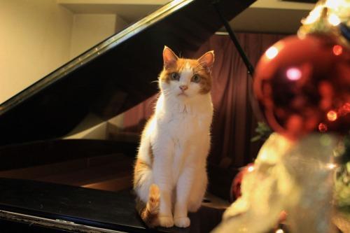 ブログNo.460(クリスマスツリーと猫)3
