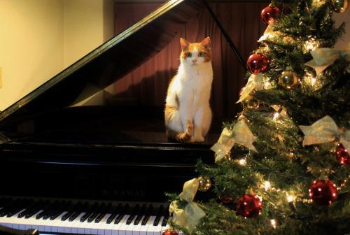 ブログNo.460(クリスマスツリーと猫)4