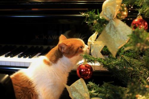 ブログNo.460(クリスマスツリーと猫)5