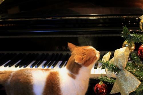 ブログNo.460(クリスマスツリーと猫)6