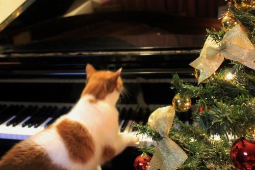 ブログNo.460(クリスマスツリーと猫)7