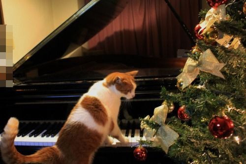 ブログNo.460(クリスマスツリーと猫)8