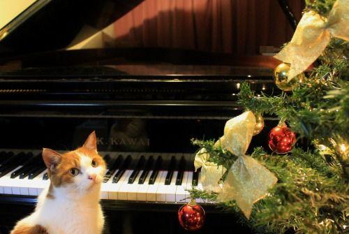ブログNo.460(クリスマスツリーと猫)9