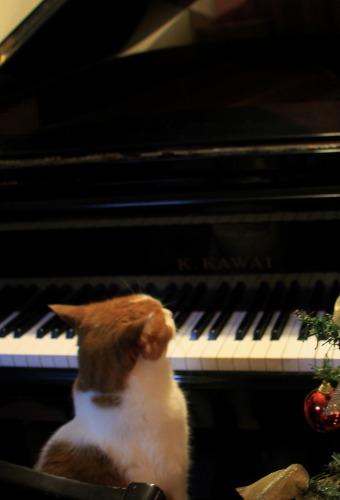ブログNo.460(クリスマスツリーと猫)10