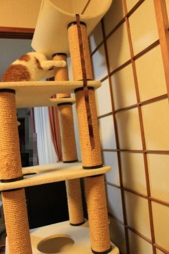 ブログNo.496(駆け抜ける猫)21