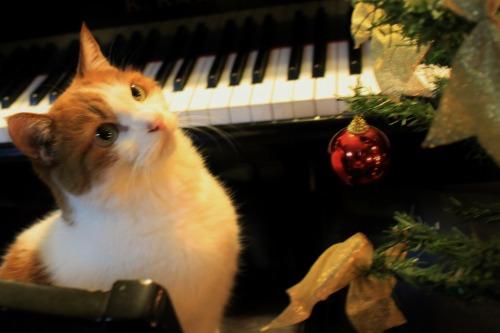 ブログNo.460(クリスマスツリーと猫)11