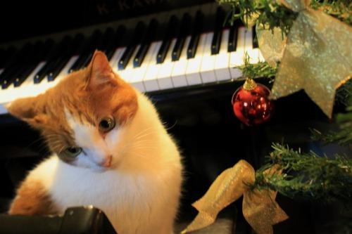 ブログNo.460(クリスマスツリーと猫)12