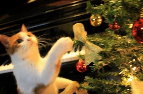 ブログNo.460(クリスマスツリーと猫)13