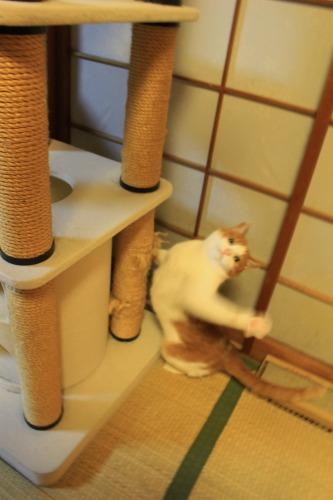 ブログNo.496(駆け抜ける猫)24