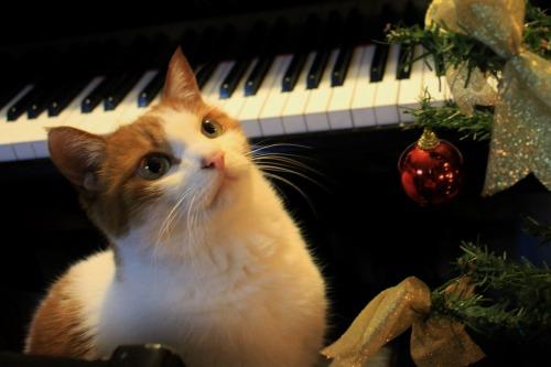 ブログNo.460(クリスマスツリーと猫)14