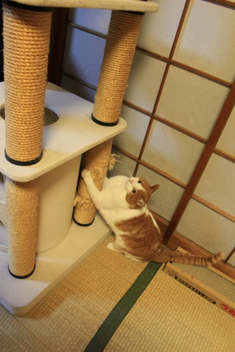 ブログNo.496(駆け抜ける猫)23