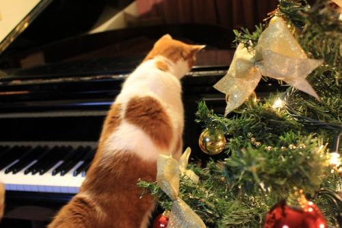 ブログNo.460(クリスマスツリーと猫)15