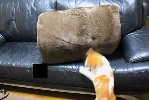 ブログNo.462(座布トンネルで遊ぶ猫)1